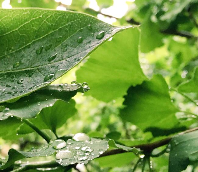 雨のあたる場所