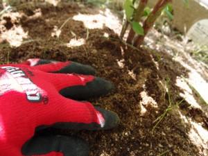 肥料と土をなじませる