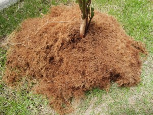 ブルーベリーの根