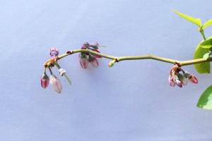 花びらの落下が始まる