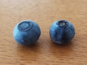 ブルーベリーの実の色の違い