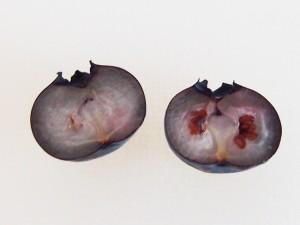 ブルーベリーの種の取り方