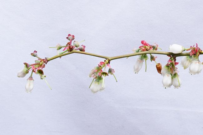 花びらが落下