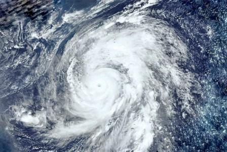 ブルーベリーの台風への備え